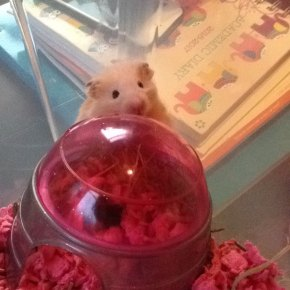Meet the hamster previously known as Luna